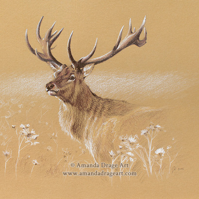 Red Stag Drawing