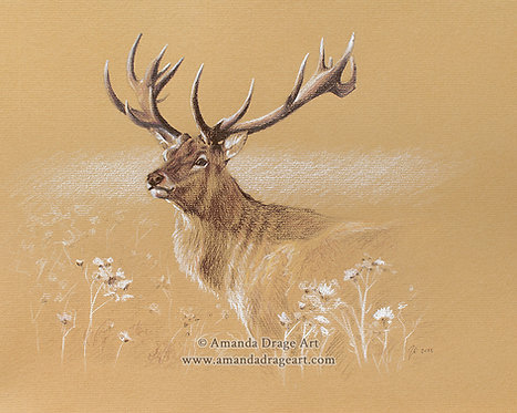 """""""Red Stag"""" Print"""