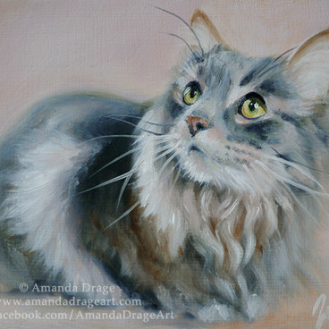 Maine Coon Cat Oil Painting