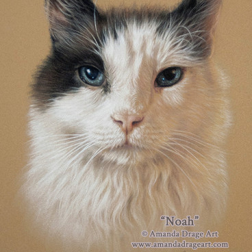 Snowshoe Cat Pastel Portrait