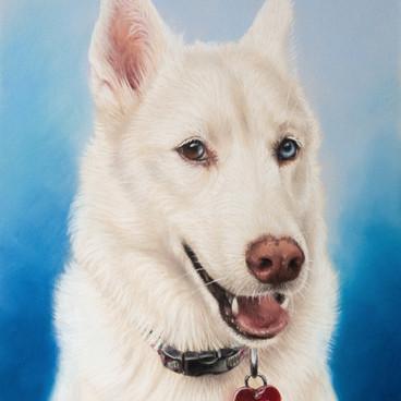 Husky Pastel Portrait