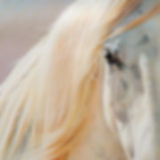 Close up of horse portrait by Amanda Drage Art