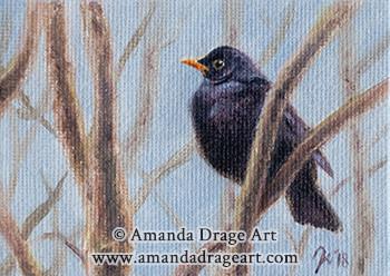 Blackbird Miniature Oil Painting