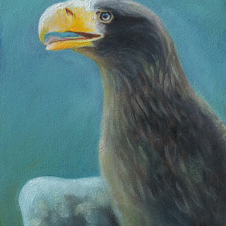 9: Young Stellers Sea Eagle