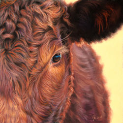 PAstel drawing of Ruby Red Devon cow by Amanda Drage Art