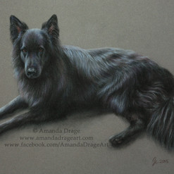 Black German Shepherd Pastel Portrait