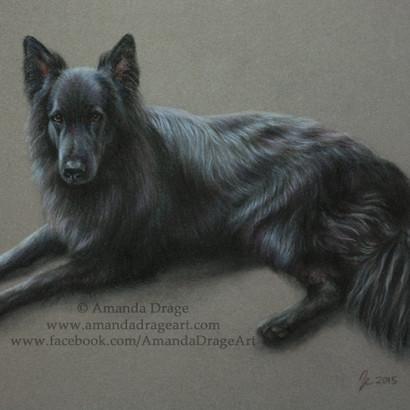 Black German Shepherd Pastel Portrait