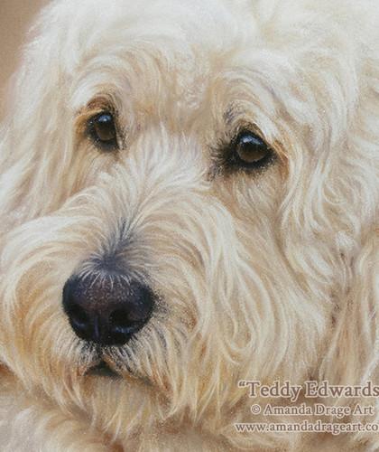 Labradoodle Pastel Portrait on Sanded Paper