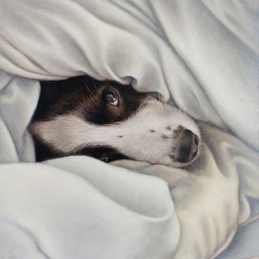 Springer Spaniel Oil Painting