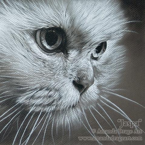 Australian Tiffanie Cat Pencil Portrait