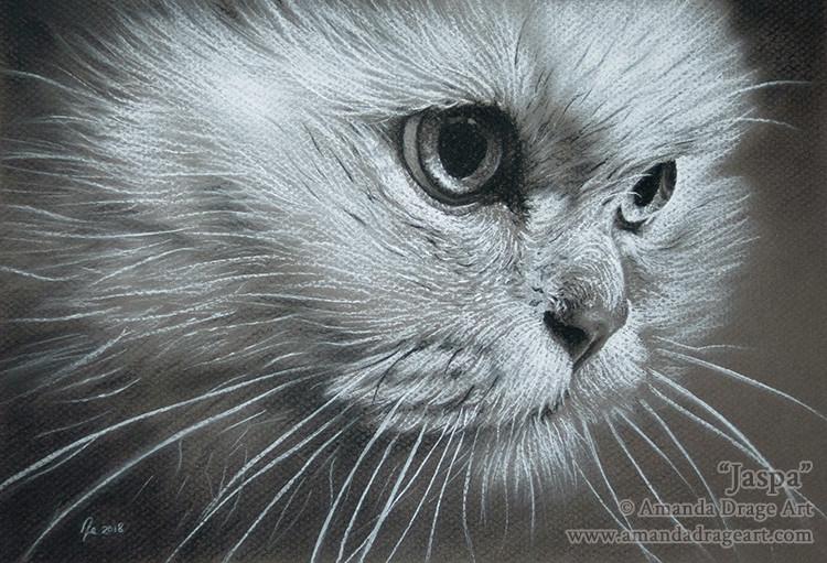Cat Tonal Sketch