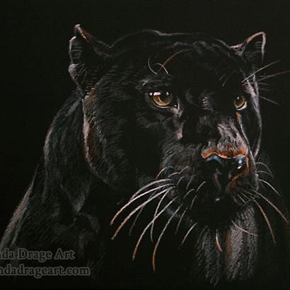 Black Jaguar Drawing