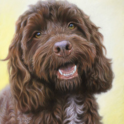 Chocolate Cockapoo Pastel Portrait