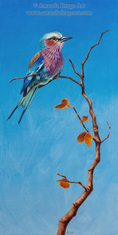Lilac Breasted Roller on Mopane