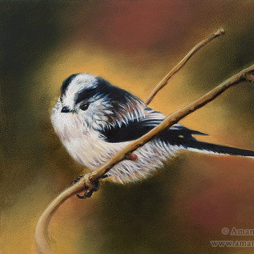 Long Tailed Tit Oil Painting
