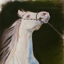 Arabian Horse Pastel Drawing