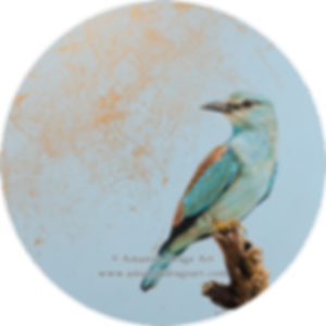 A circular painting of a European Roller by Amanda Drage Art