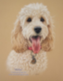 Cockapoo portrait in pastel by Amanda Drage Art