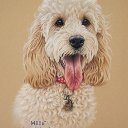 Cream Blonde Cockapoo Pastel Portrait