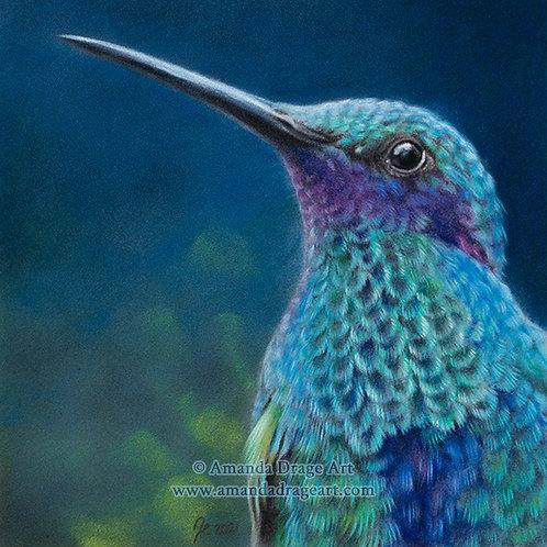 """Sparkling Violet-eared Hummingbird"" Limited Edition Mini Print"