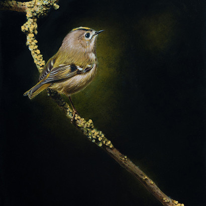 Goldcrest Oil Painting