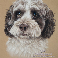 Chocolate and White Cockapoo Pastel Portrait