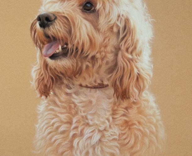 Cockapoo Pastel Portrait on Tan Velour Paper