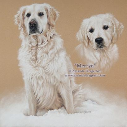 Golden Retriever Adult and Pup Pastel Portrait