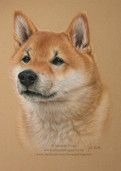 Portrait of Solo the Shiba Inu by Amanda DrAge Art