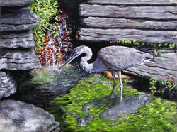 Blue Heron in Lincoln Park_blurred