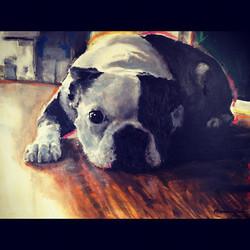 Zaks+Boston+Terrier+Rokki+2005.jpg