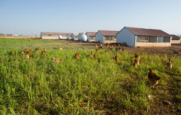Αγρόκτημα Φράγκου