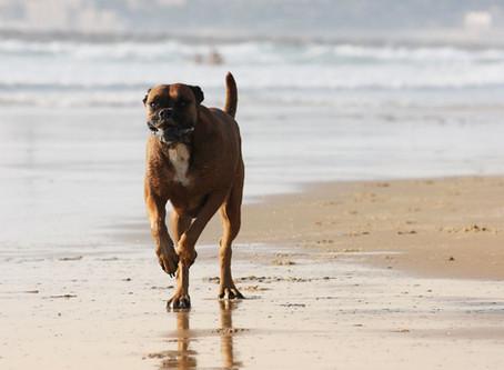 Dogs on the Beach!