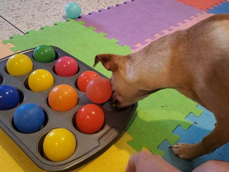 The Importance of Enrichment for Dogs