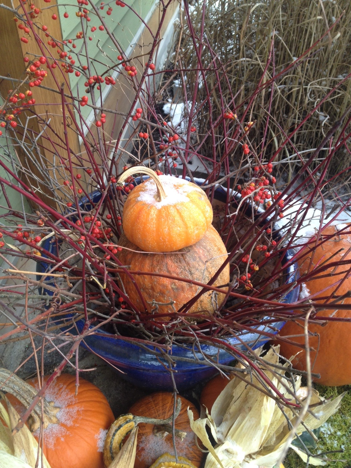 pumpkins & bittersweet