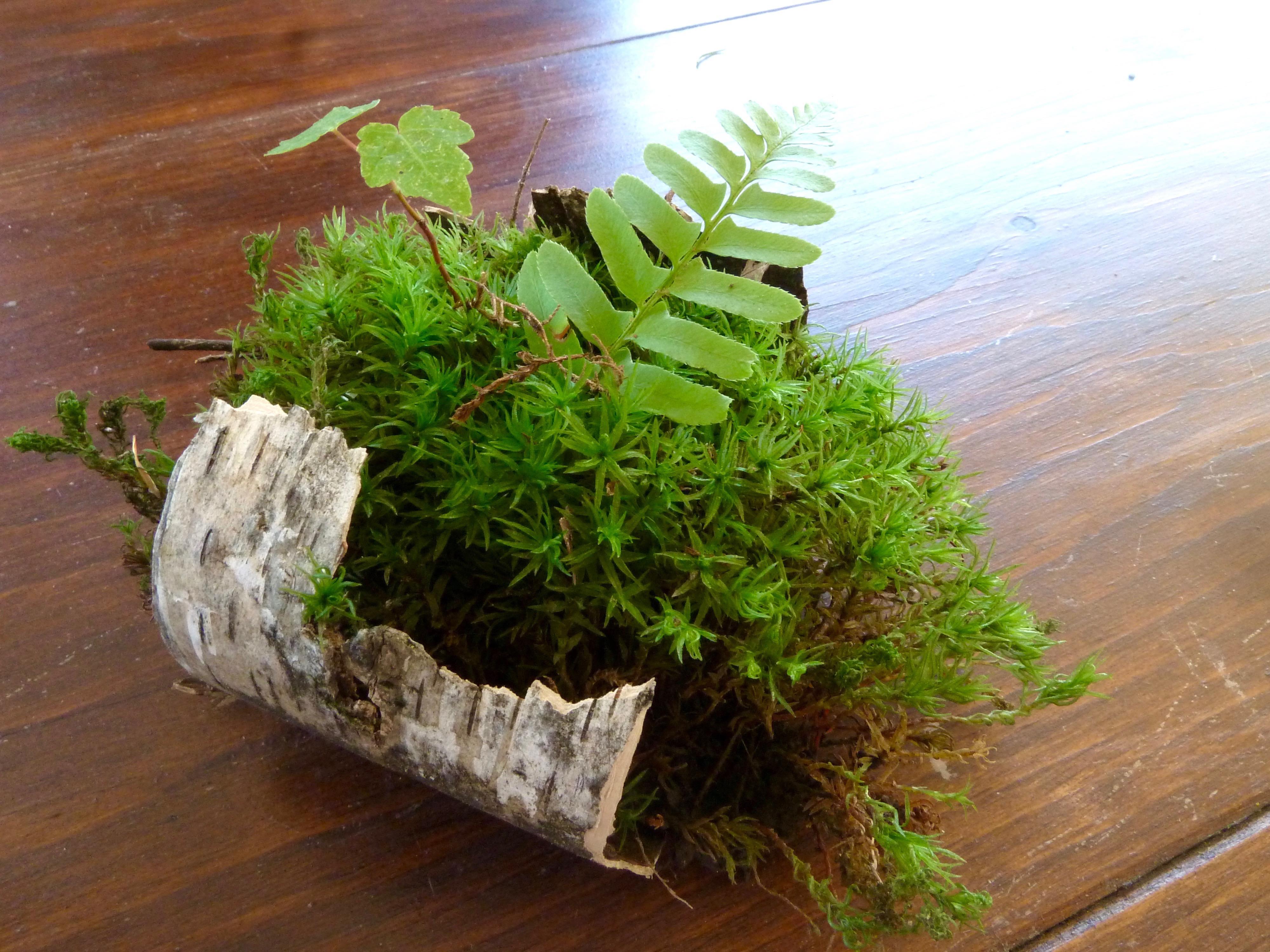 bark & moss pod