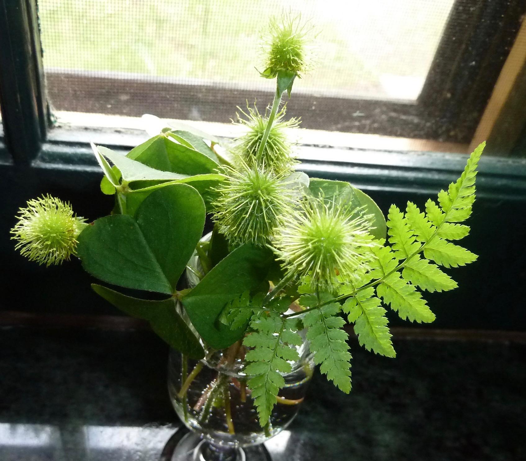 ferns & seedheads