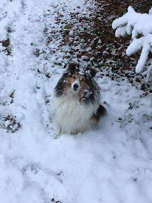 Jesse in Winter.jpg