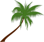 palm-tree-155730_1280.png