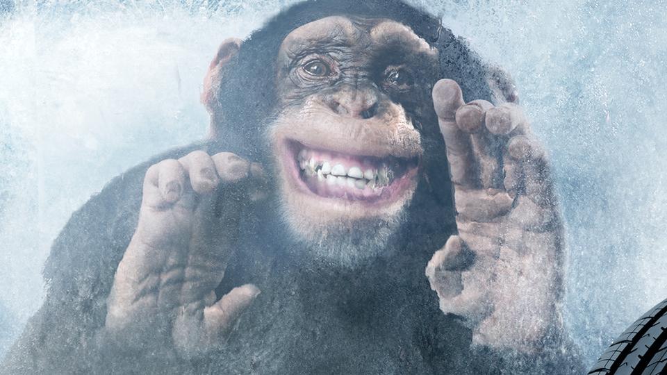 Dê férias para o macaco