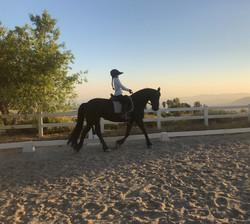 Jil - Friesian lesson horse, Lucia Rapal