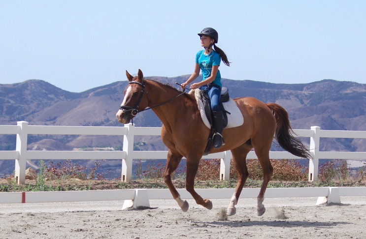 Jack - Intermediate lesson horse