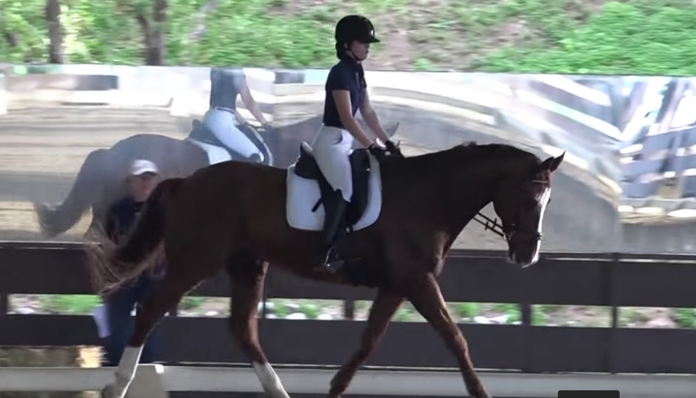 Agundo-Advanced/lunge line Warmblood