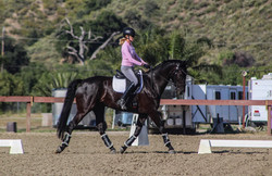 Dressage training with Lucia Rapalyea Dr