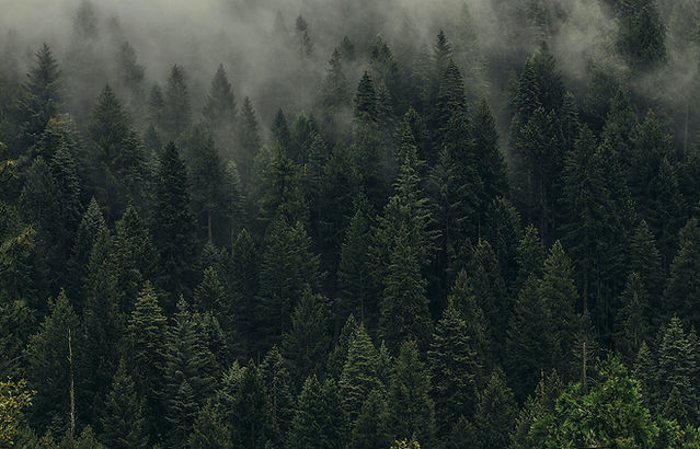 eco friendly ski shot-plant a tree for every shot ski sold