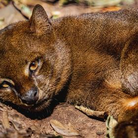 Gato-mourisco