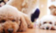 伊豆高原 ペンション フォレストヴィラオリーブ 天然温泉 露天風呂 貸切 アンティーク バーベキュー ペット 癒し