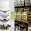 Thumbnail: Moringa (Malunggay) 500mg REGULAR Capsules Bottle of 120 pcs