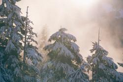 Schneebedeckten Bäume