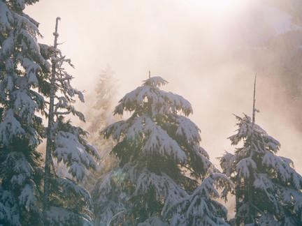 Winter's Undoing - A Poem
